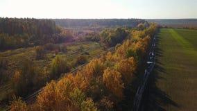 Strada di autunno nel campo con gli alberi gialli archivi video