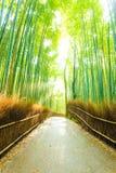 Strada di bambù di Forest Sun Light Beams Empty dell'albero Fotografie Stock Libere da Diritti