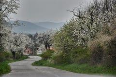 Strada di bobina al villaggio nella primavera Fotografia Stock