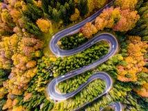 Strada di bobina circondata dagli alberi di un colourfull nella foresta fotografia stock