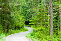 Strada di bobina in foresta Immagini Stock Libere da Diritti