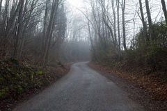 Strada di bobina in foresta Fotografia Stock Libera da Diritti