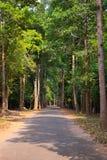 Strada di bobina nella foresta pluviale fotografia stock