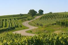 Strada di bobina nelle vigne dell'Alsazia Fotografia Stock Libera da Diritti
