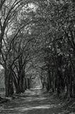 Strada di caduta del paese in bianco e nero Fotografia Stock Libera da Diritti