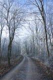 Strada di dicembre di inverno della foresta del gelo Fotografia Stock
