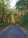 Strada di Forrest in autunno con i bei colori fotografia stock