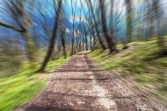Strada di Froest nel mosso un giorno soleggiato, cloese Fotografia Stock Libera da Diritti