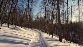 Strada di gatto delle nevi nella foresta fotografia stock libera da diritti