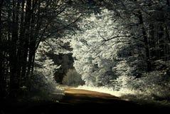 strada di infrared della foresta dell'incrocio del paese Fotografia Stock Libera da Diritti