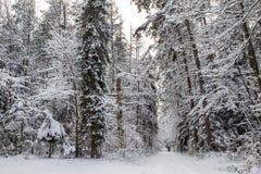 Strada di inverno immagini stock libere da diritti