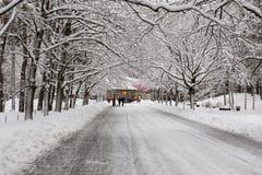 Strada di inverno al parco Fotografie Stock Libere da Diritti