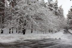 Strada di inverno al parco Immagine Stock