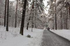 Strada di inverno al parco Fotografia Stock