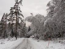 Strada di inverno con forte nevicata sugli alberi Immagine Stock Libera da Diritti