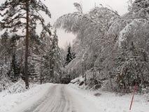 Strada di inverno con forte nevicata sugli alberi Fotografia Stock