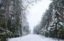 Strada di inverno di Snowy Immagine Stock Libera da Diritti