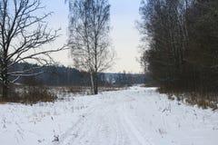 Strada di inverno nella foresta Immagine Stock