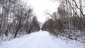 Strada di inverno nella foresta Immagini Stock Libere da Diritti