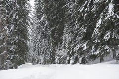 Strada di inverno in una foresta Fotografia Stock Libera da Diritti