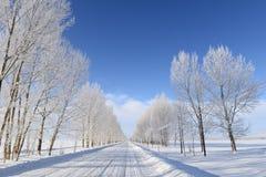 Strada di inverno in Yili fotografia stock libera da diritti