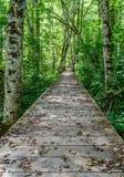 Strada di legno nella foresta Immagine Stock