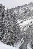 Strada di Mountaine e grandi alberi Immagini Stock Libere da Diritti