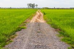 Strada di pietra della ghiaia con riso Fotografie Stock