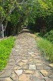 Strada di pietra in una foresta Immagine Stock Libera da Diritti