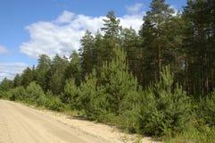 Strada di Sangy nella foresta del pino Fotografia Stock