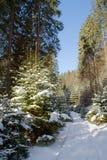 Strada di Snowy alla foresta di conifere nel giorno soleggiato Immagini Stock