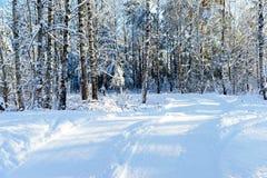 Strada di Snowy in foresta, alberi congelati, giorno soleggiato Immagine Stock