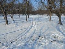 Strada di Snowy nel parco di inverno con gli alberi con le foglie cadute Fotografia Stock