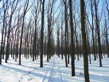 Strada di Snowy nel parco di inverno con gli alberi con le foglie cadute Immagini Stock Libere da Diritti
