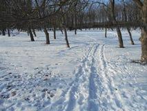 Strada di Snowy nel parco di inverno con gli alberi con le foglie cadute Immagine Stock