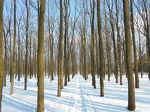 Strada di Snowy nel parco di inverno con gli alberi con le foglie cadute Fotografie Stock