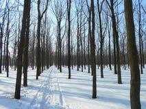 Strada di Snowy nel parco di inverno con gli alberi con le foglie cadute Fotografia Stock Libera da Diritti