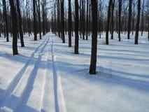 Strada di Snowy nel parco di inverno con gli alberi con le foglie cadute Fotografie Stock Libere da Diritti