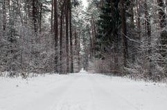 Strada di Snowy nella foresta Immagine Stock