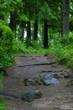 strada di verde di foresta Fotografie Stock Libere da Diritti