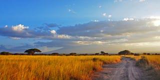 Strada dorata della savanna Immagine Stock Libera da Diritti