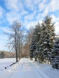 Strada e bei alberi nevosi nell'inverno, Lituania Fotografia Stock Libera da Diritti