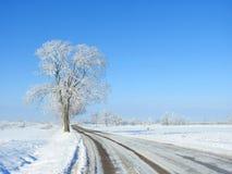 Strada e bei alberi nevosi nell'inverno, Lituania Immagini Stock Libere da Diritti