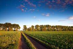 Strada e campo verde con giovane cereale Fotografie Stock
