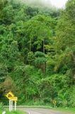 Strada e foresta pluviale della curva in montagna dell'Asia Fotografie Stock