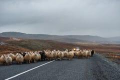 Strada e pecore vuote in Islanda Natura selvaggia Agricoltore locale Car nel fondo Fotografia Stock