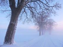 Strada e vecchi alberi nei colori del cielo di alba, Lituania Immagini Stock