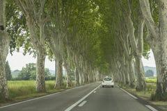 Strada ed alberi Fotografie Stock