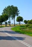 Strada ed alberi Fotografia Stock