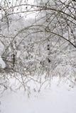 Strada ed alberi bianchi nella stagione di inverno Immagine Stock Libera da Diritti
